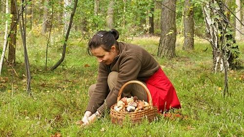 сбор лесных грибов