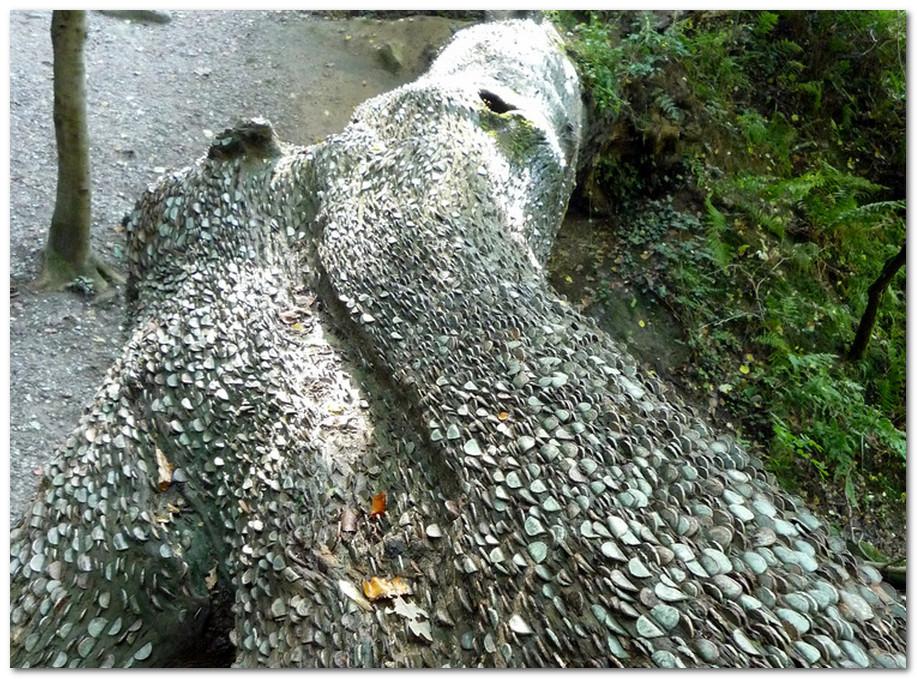 монеты в дереве