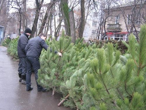 продажа елок