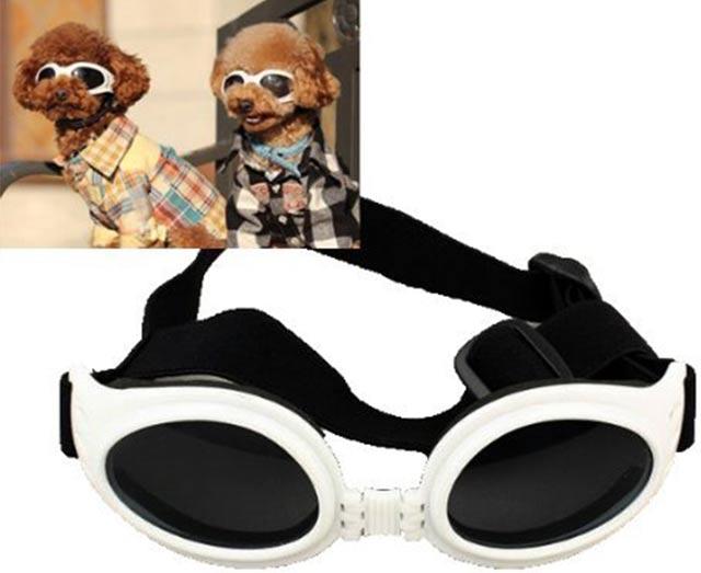 очки для  животных